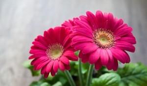 flower-631765__180
