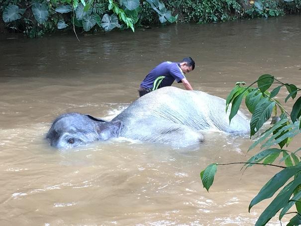 Kuala Gandah Dan Pesona Gajah Untuk Anda